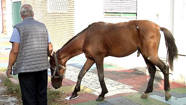 Rescatan caballo golpeado por dueños tras caer por fatiga