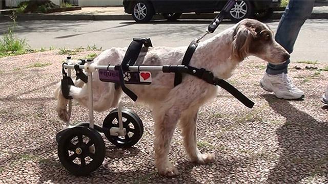 Conoc el proyecto masque4patas carritos para animales for Carritos para perros