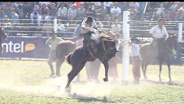 Bienestar Animal destaca el buen estado de los caballos en la Criolla
