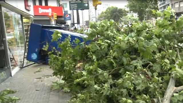 Un kiosko aplastado y varios árboles caídos producto del viento