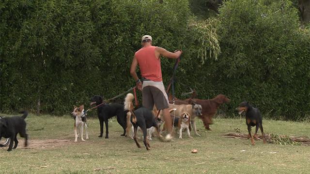 La Intendencia definirá qué razas de perro deben circular con bozal